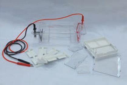 DYCP-31DN瓊脂糖水平電泳儀