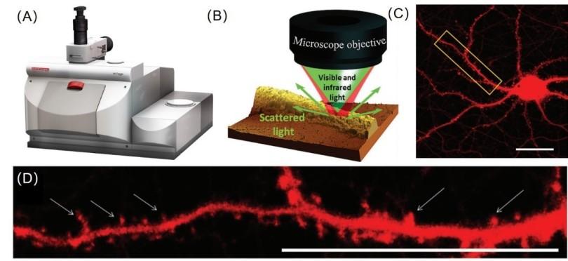 科学家借助全新非接触式亚微米红外光谱首次成功直观揭示神经元