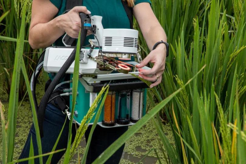 使用LI-6800高级光合-荧光测量系统测量水稻光合作用.jpg