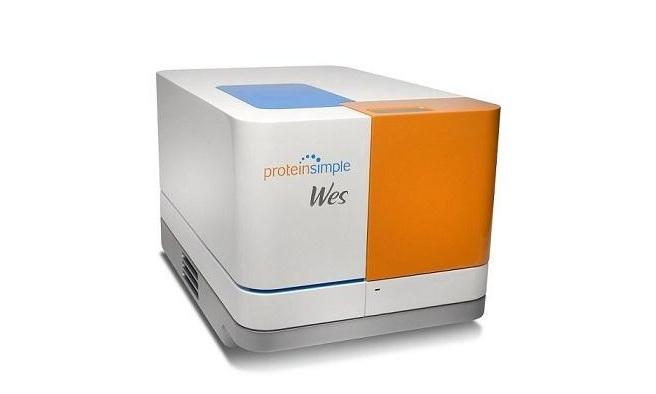 河南科技大学第一附属医院全自动蛋白质表达定量分析系统采购招标